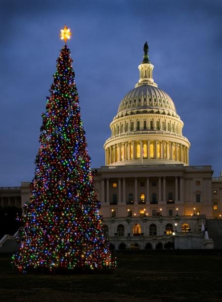 2013-Capitol-Xmas-Tree