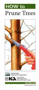 How-to-Prune-Trees