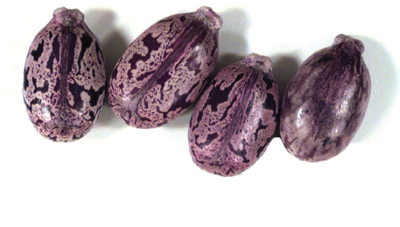 Castor-beans-used-to-make-ricin