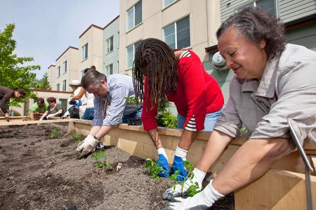 Urban gardeners at work planting new seedlings